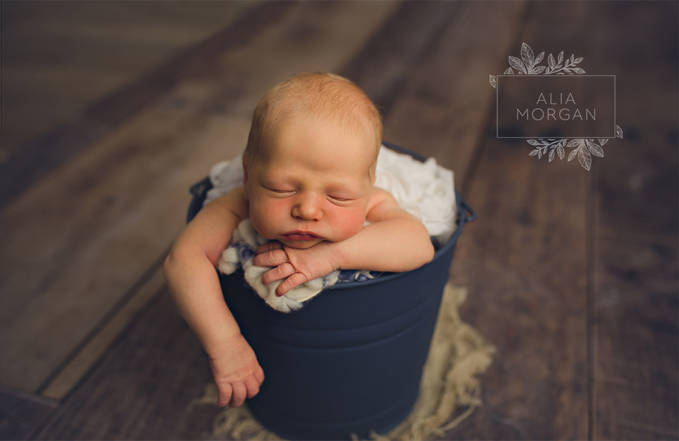 posed newborn photos in milwaukee